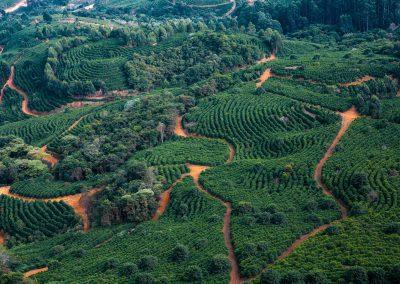 Fazendas Dutra - Kaffeelandschaft