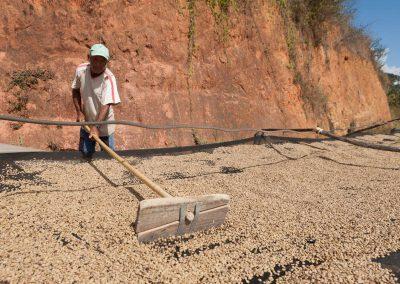 Brasilien, Fazendas Dutra: Trocknen des Pergamentkaffees auf Suspensions-Netzen