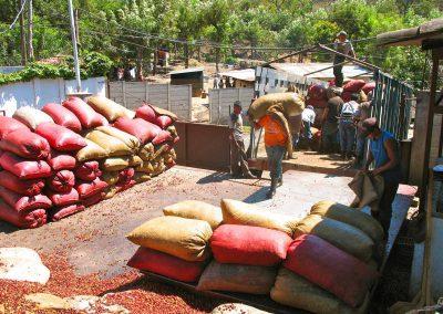anlieferung-der-kaffeekirschen