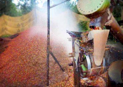 pulpe-auf-komposthaufen